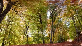 Autumn picturesque path. Picturesque autumn path on a beech forest Royalty Free Stock Photo