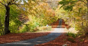 Autumn picturesque path Royalty Free Stock Photos