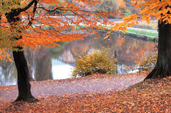 Autumn. Picturesque place on the lake in Kaliningrad Stock Photo