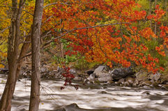 Autumn Pigeon River Royalty Free Stock Images