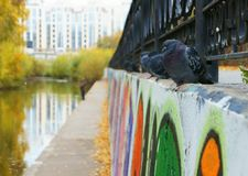 Autumn and pigeons stock photography