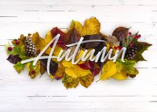 Autumn Pile of Foliage Wood Background royalty free stock image