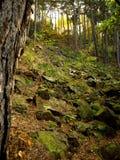 Autumn pine forest. Deep forest in Czech Republic stock photos