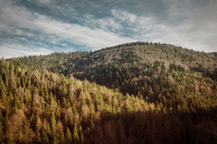 Autumn Pine trees and hills landscape in Poland. Pine trees forrest and hills, landscape in Poland Royalty Free Stock Photography