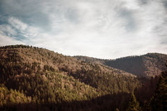 Autumn Pine trees and hills landscape in Poland. Spruce, pine trees forrest and hills landscape in Poland Royalty Free Stock Photo