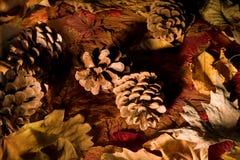 Autumn pinecones stock photo