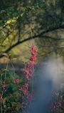 Autumn plant forest on a blurred background Royalty Free Stock Images