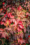 Autumn plant. hedge royalty free stock photography