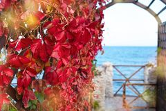 Autumn plant red foliage natural Park on the beach Beautiful autumn landscape selective focus. Autumn plant red foliage natural Park on the beach. Beautiful stock image