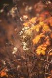 Autumn Plant Scenic Imagenes de archivo