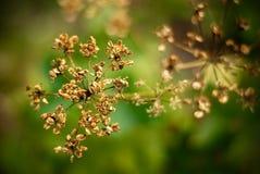 Autumn plants. Some plant on autumn season Stock Photos