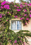 Autumn plants around house window in Portugal Stock Photography