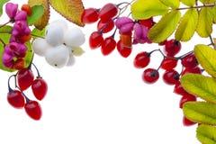 Autumn plants and  berries postcard Stock Photo