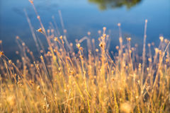 Autumn plants on the bog Royalty Free Stock Images