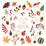 Autumn plants collection Royalty Free Stock Photography