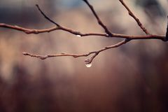 Autumn plants with drops of water after the November freezing r Royalty Free Stock Photos