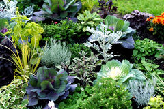 Autumn plants in fresh bed. Autumn flower bed with beautiful plants Royalty Free Stock Image