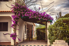 Autumn plants and garden in Portugal Algarve Stock Image