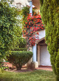 Autumn plants and garden in Portugal Algarve Royalty Free Stock Photo