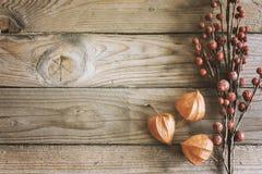 Autumn plants mockup scene royalty free stock photos