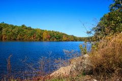 Autumn plants on the shore of West Hartford Reservoir. Autumn landscape featuring colorful plants and trees on the edge of West Hartford Reservoir Stock Images