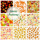 Autumn plants and trees leaves. Seamless patterns Royalty Free Stock Photos