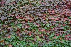 Autumn plants Royalty Free Stock Photo