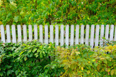 Autumn plants with white fence Stock Photos