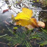 Autumn play in a puddle stock photo