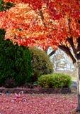 Autumn Playtime Scene fotografía de archivo libre de regalías