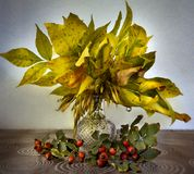 Yellow leaves and red berries.Autumn still life stock illustration