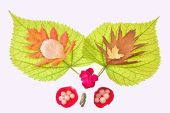 Autumn pleasure. Beauty and colors of the leaves of autumn Stock Images
