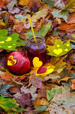 Autumn pomegranate cocktail Stock Image