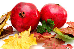 Autumn Pomegranates Royalty Free Stock Images