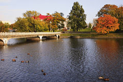 Autumn pond. Pond in the autumn in city park Royalty Free Stock Image