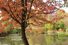Autumn on Pond Stock Photography
