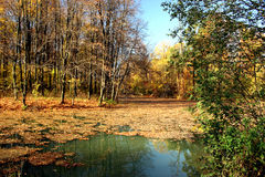 Autumn pond. Walk in autumn park Royalty Free Stock Photography