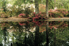 Autumn pond. A small pond in the middle of a forest Royalty Free Stock Photography