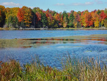 Autumn Pond. Pond among colorful autumn trees Royalty Free Stock Images