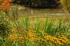 Autumn pond. Colorful autumn pond with flowers Stock Image