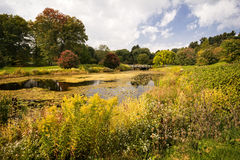 Autumn Pond Stock Photography