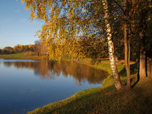 Autumn pond with birch Stock Image