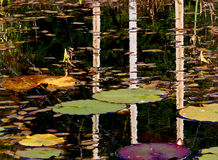 Autumn Pond erings. Autumn colors and reflections in a pond Royalty Free Stock Photo