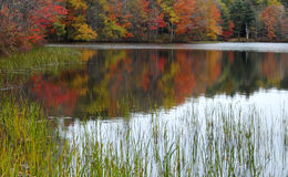 Autumn Pond Stock Images