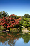 Autumn pond and garden in fall Royalty Free Stock Photos