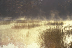 Autumn Pond in Mist Stock Image