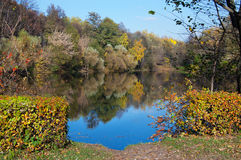 Autumn pond in park. Pond in the autumn park, bordered with trees and bushes with yellow foliage Royalty Free Stock Images