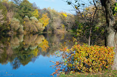 Autumn pond in park. Pond in the autumn park, bordered with trees and bushes with yellow foliage stock image