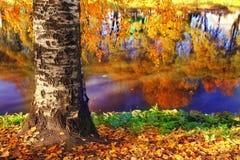 Autumn at the pond park Stock Photo