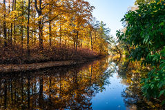 Autumn pond in park. Pond in the autumn park with trees reflected in it Stock Photography